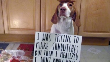 pc-140226-dogshaming2_6857b2c57e8783f7648de4cab71fb499