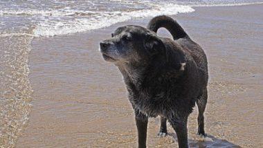 400px-Senior_Dog