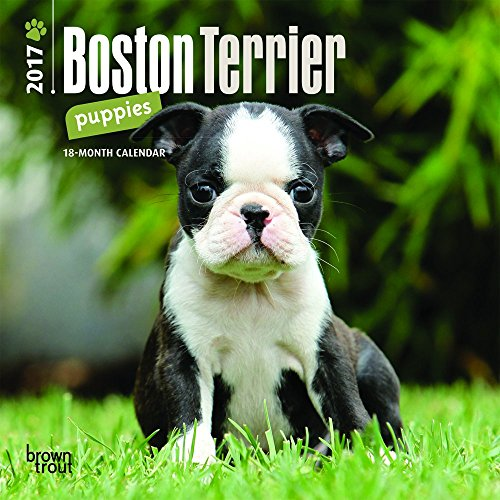 Boston Terrier Video: Meet Libre, The Boston Terrier Who is Fighting For His Life