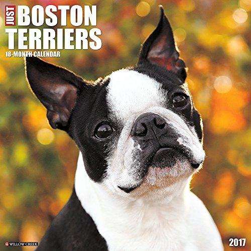Tips On Boston Terrier Training