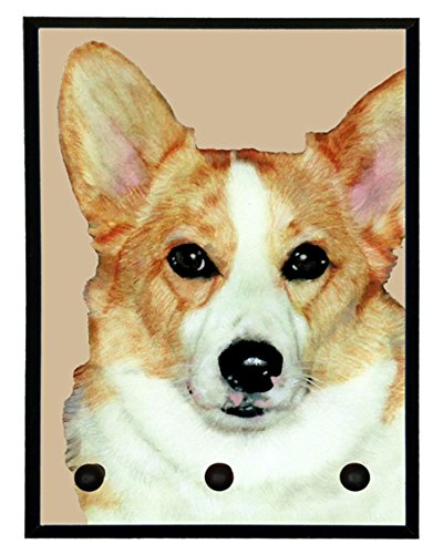 Pembroke Welsh Corgi Video: Pembroke Welsh Corgi Smalls Confused by Mirror
