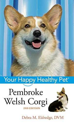 The Pembroke Welsh Corgi and Its Amazingly Small But Terrible Herding Glory