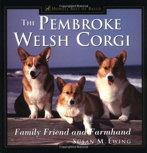 Welsh Pembroke Corgi