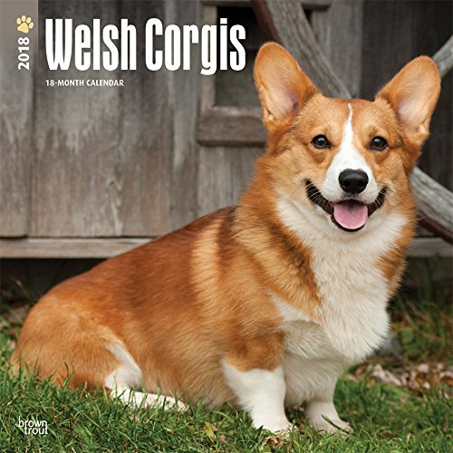 Welsh Corgi Video: Welsh Corgi Massage