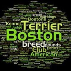 boston-terrier2021.jpg