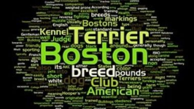 boston-terrier2021.jpg