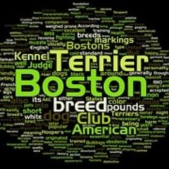 boston-terrier2074.jpg