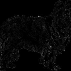 shetland-sheepdog201.png