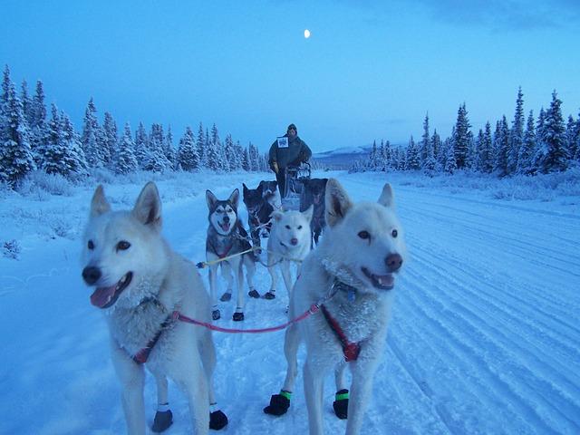 Dogs, Sled, Team, Teamwork, Winter, Snow, Alaska