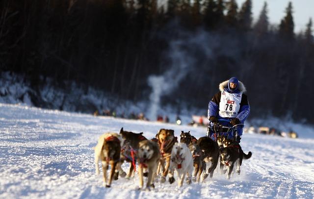 Dogs, Sled, Team, Dogsled, Teamwork, Winter, Snow