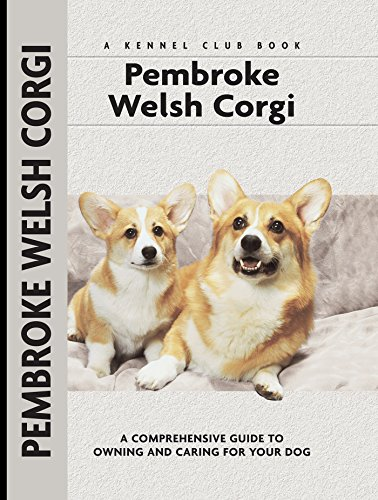 Breed of the week: the kinetic Welsh Corgi