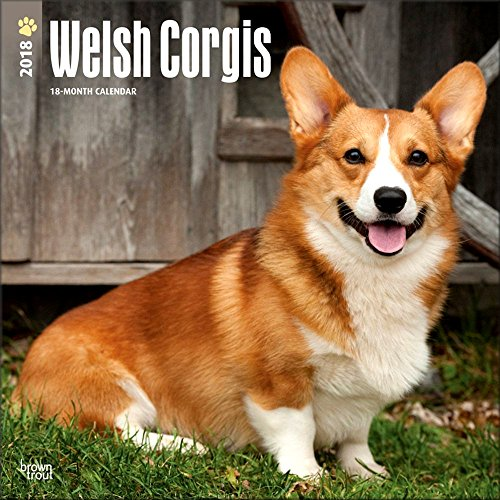 Welsh Corgi Video: Cute 10 puppies = Chaos!  [Part 2] storm over コーギーを6匹並べたら世界がもん絶 子犬 dog welsh corgi pembroke