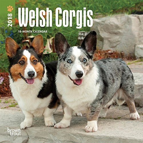 Welsh Corgi Video: Funny Corgi Video 2017 # 3