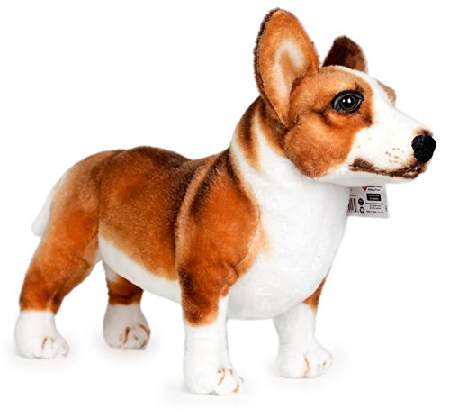 Welsh Corgi Video: Welsh Corgi & Baby