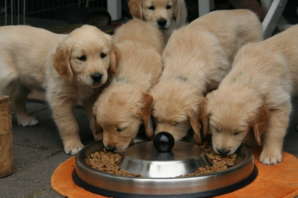 Food Products and Supplements for Your Pet