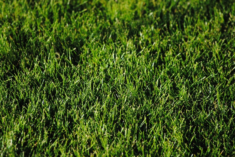 Is Artificial Grass Safe For My Dog?