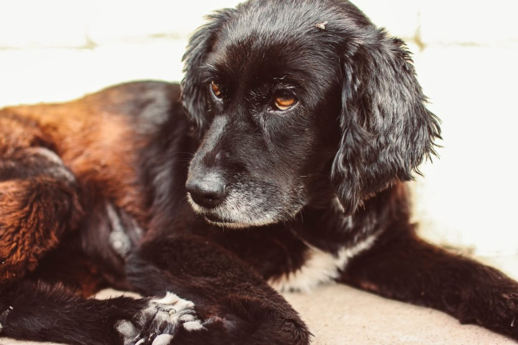 Why Your Dog Is not Eating: Symptoms, Causes & Solutions