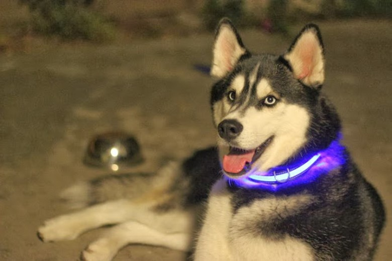 Stay Safe with LED Dog Collars and Leashes