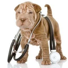 Mobile Pet Care