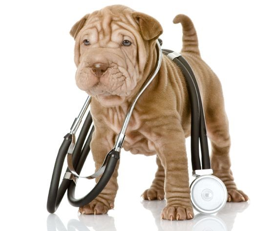 7 Reasons Mobile Pet Care is Better