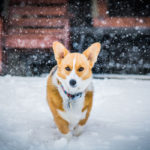 Top 5 Dog Grooming Tips For This Winter