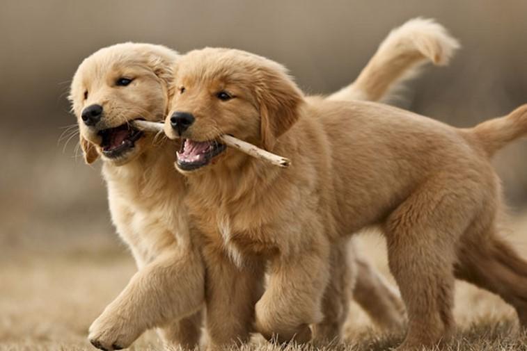 www.doglifehq.com