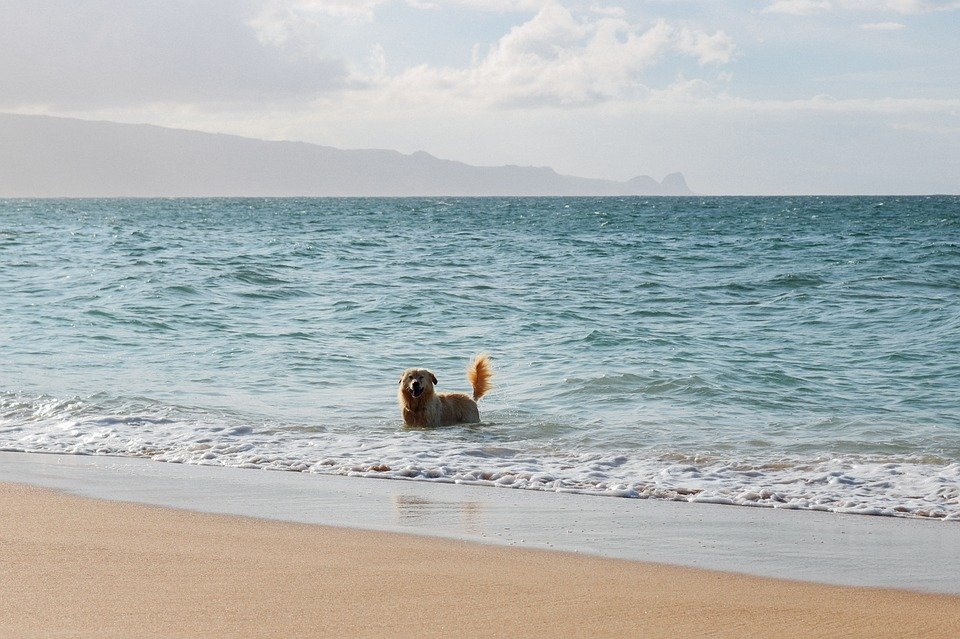 The Best Pet Care in Hawaii