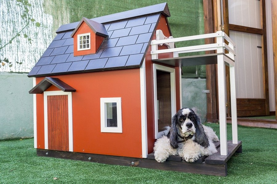 Buying a Kennel For Your Furry Friend, These Tips Can Help